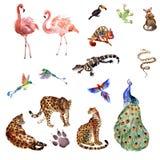 Собрание акварели тропических животных изолированных на белой предпосылке стоковые изображения rf