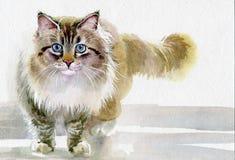 Собрание акварели животное: Кот Стоковая Фотография