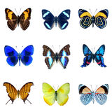 Собрание бабочек на белой предпосылке Стоковое Изображение