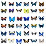 Собрание бабочек на белой предпосылке Стоковое Изображение RF