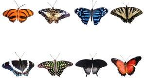 Собрание бабочек на белой предпосылке Стоковое фото RF