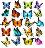 собрание бабочек цветастое Стоковая Фотография