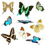 собрание бабочек Стоковая Фотография RF