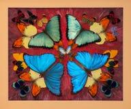 собрание бабочки цветастое Стоковое Фото
