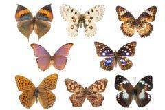 собрание бабочки Стоковое Фото
