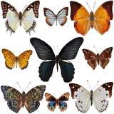 Собрание бабочки Стоковые Изображения RF