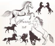 Собрание вектора детализировало лошадей с силуэтами для desig иллюстрация штока