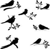 Собрание вектора силуэтов птицы Стоковое фото RF