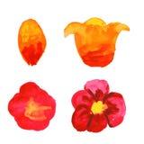 Собрание вектора флористическое покрашенной розовой акварели Стоковые Изображения
