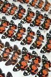Собрание викторианских бабочек Стоковое Фото