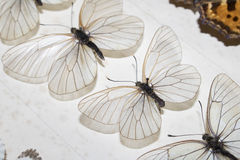 Собрание викторианских бабочек Стоковая Фотография