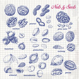 Собрание гаек и семян на бумаге Стоковое Фото