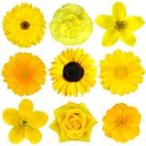 Собрание желтых цветков изолировало Стоковое Изображение RF