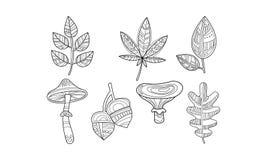 Собрание заводов руки вычерченных, листьев, monochrome грибов и иллюстрации вектора жолудей иллюстрация штока