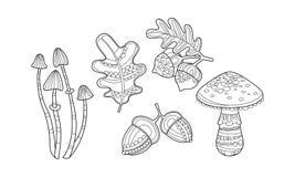Собрание заводов руки вычерченных, monochrome иллюстрации вектора листьев, грибов, фундуков и жолудей иллюстрация вектора