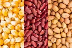 Собрание зерна стоковые фото