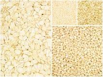 Собрание зерна стоковая фотография rf