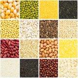 Собрание зерна стоковое изображение rf