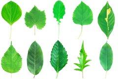 собрание зеленого цвета выходит при изолированный стержень на белизну Стоковое Изображение
