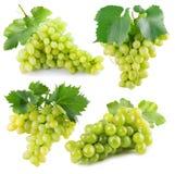 Собрание зеленых виноградин изолированных на белой предпосылке Стоковое фото RF