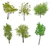Собрание 6 зеленых деревьев изолированных на белизне Стоковые Фото