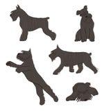 Собрание значков собаки шнауцера стоковые изображения