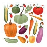 Собрание зрелых свежих сжатых овощей, плодоовощей, ягод, жолудей изолированных на белой предпосылке Пачка собранный иллюстрация вектора