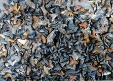 Собрание зуба акулы Стоковое Изображение RF