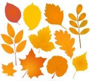 Собрание листьев осени Стоковое Фото