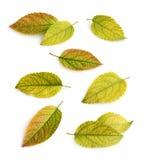 Собрание листьев падения Стоковые Изображения