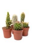 Собрание кактуса изолированное на белой предпосылке стоковые изображения rf