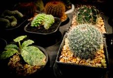 Собрание кактуса Стоковое Изображение