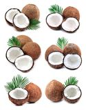 Собрание кокосов стоковая фотография