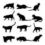 Собрание котов - силуэт Стоковые Изображения RF