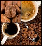 собрание кофе Стоковая Фотография RF