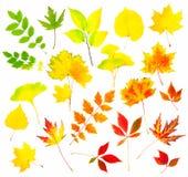 Собрание красивейших цветастых листьев осени Стоковое фото RF