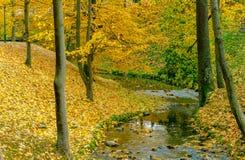Собрание красивых красочных листьев осени зеленеет, желтеет, апельсин, красный Стоковая Фотография