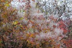 Собрание красивых красочных листьев осени стоковая фотография rf