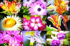 Собрание красивых цветков Стоковые Фотографии RF