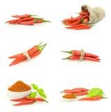 Собрание красного chili на предпосылке Стоковое Фото