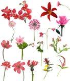 Собрание 16 красное цветков Стоковые Фото