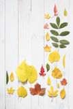 Собрание красочных листьев осени Стоковое фото RF