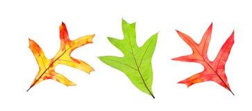 Собрание листьев падения Стоковое Изображение