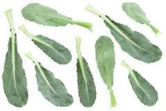 Собрание лист капусты брокколи Стоковое Изображение