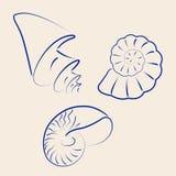 Собрание нарисованное рукой различных seashells Стоковая Фотография