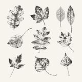 Собрание нарисованное чернилами листьев осени Стоковое Фото