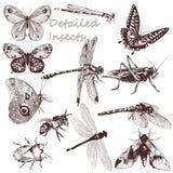 Собрание насекомых вектора детальных для дизайна иллюстрация вектора