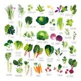 Собрание овоща искусства зажима Стоковые Фотографии RF