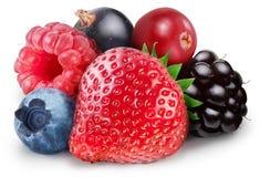 Собрание одичалых ягод Стоковая Фотография