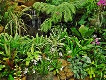Собрание орхидеи стоковая фотография rf